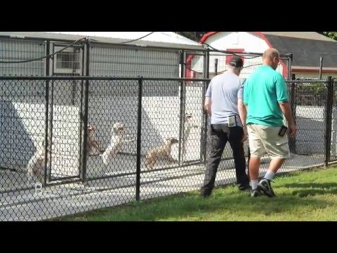 What Puppy Mills Look Like in 2016