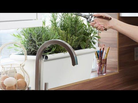 frisches-grün:-so-gedeihen-küchenkräuter-richtig-gut