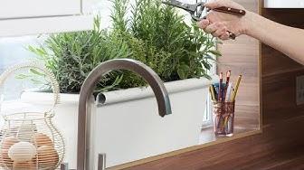 Frisches Grün: So gedeihen Küchenkräuter richtig gut