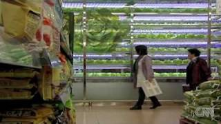 Hydroponics - Seoul's farm of the future