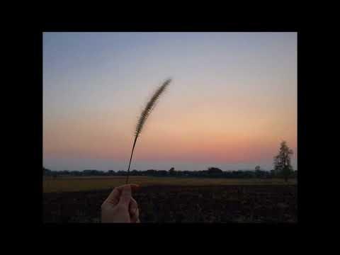 Jason Koiter - Amanda's Song