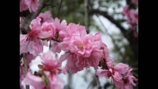 榊原温泉は 温泉好きの私が絶賛します ぬるーっと つるーっと した良い...