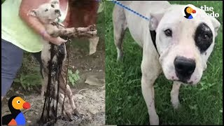 Dog Found Stuck In Tar Is Ready For A Forever Home | The Dodo