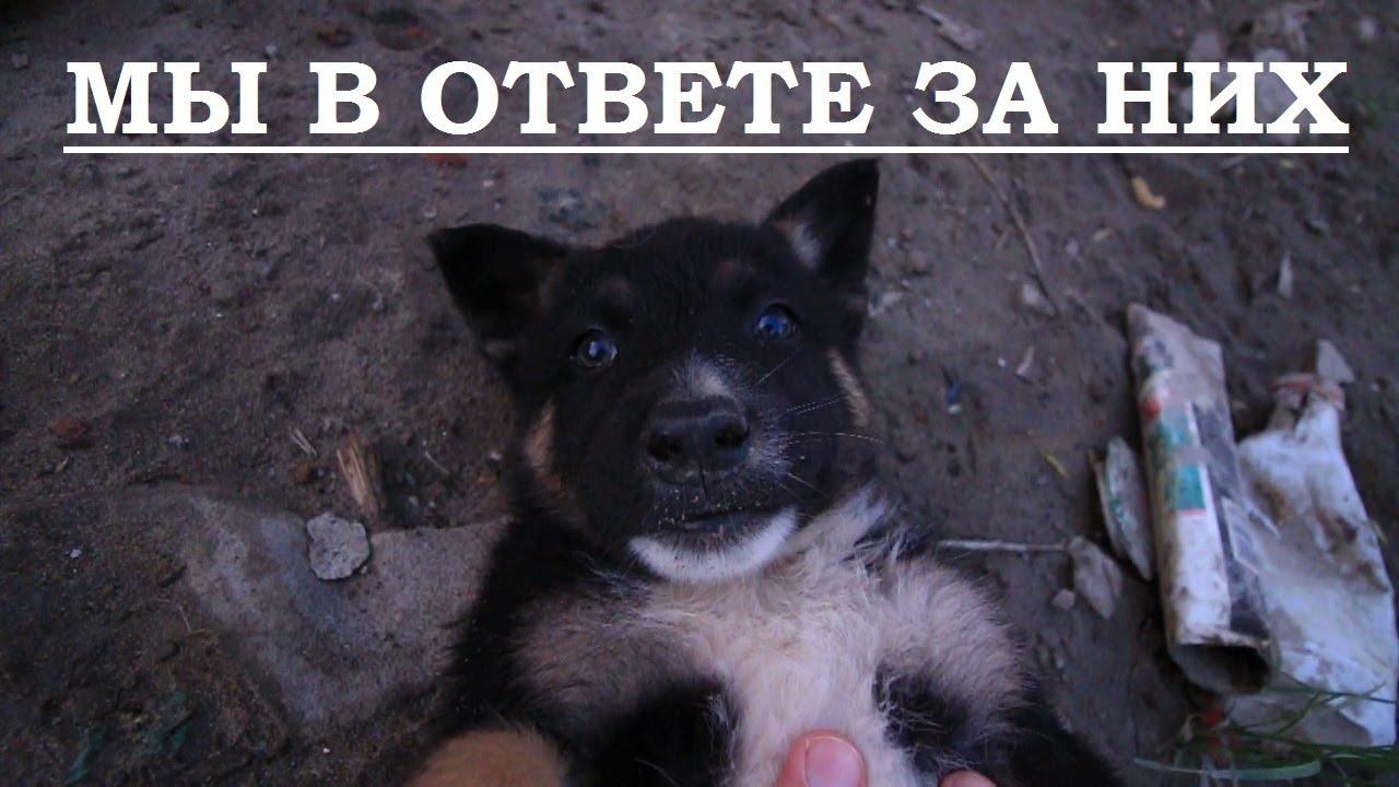 Встреча щенков