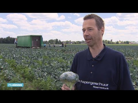 Boer Peter Verdient Maar Zo'n 3 Tot 5 Cent Per Broccoli - RTL NIEUWS