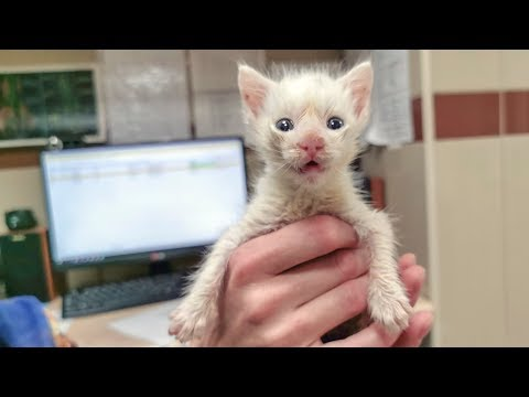 Котенок зовет свою маму человеческим языком До слез rescue stray kitten