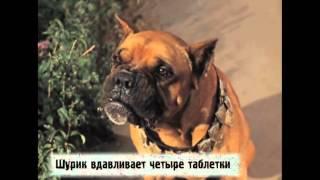 Киноляпы Операция Ы и другие приключения Шурика 1965