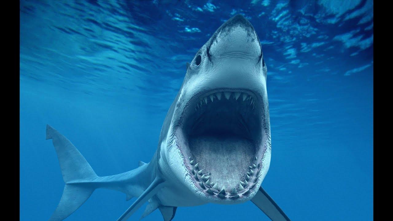 shark attack squale attaque d 39 un requin et p che youtube. Black Bedroom Furniture Sets. Home Design Ideas