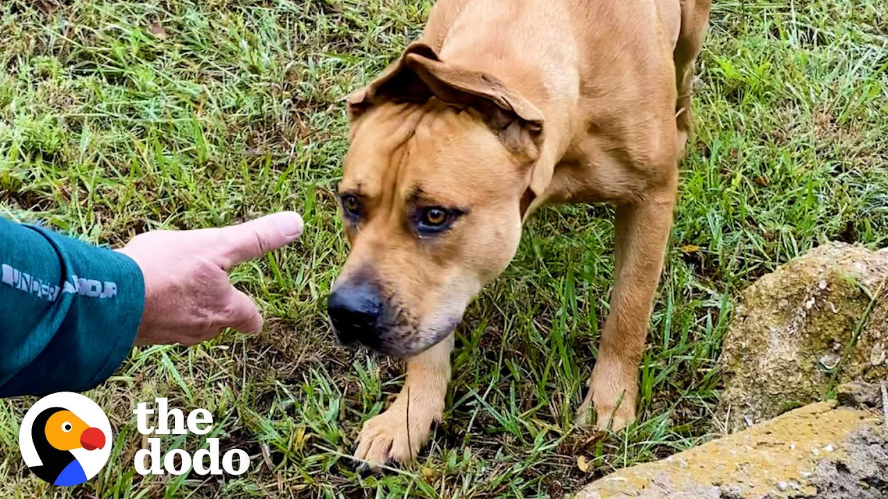 Couples Spend A Year Trying To Rescue A Stray Dog...Then This Happens | The Dodo Faith = Restored