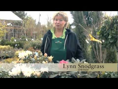 Drake's 7 Dees Garden Treasure Hunt: Rhododendrons