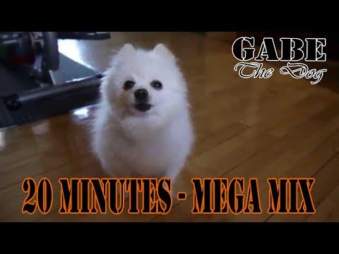 Gabe The Dog - 20 Min MegaMix