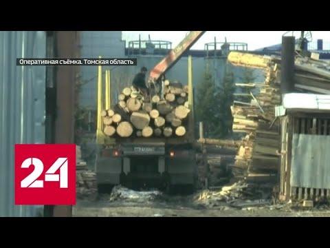 Томская ОПГ организовала контрабанду леса в Центральную Азию - Россия 24