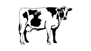 cow drawing simple draw easy cartoon drawings paintingvalley