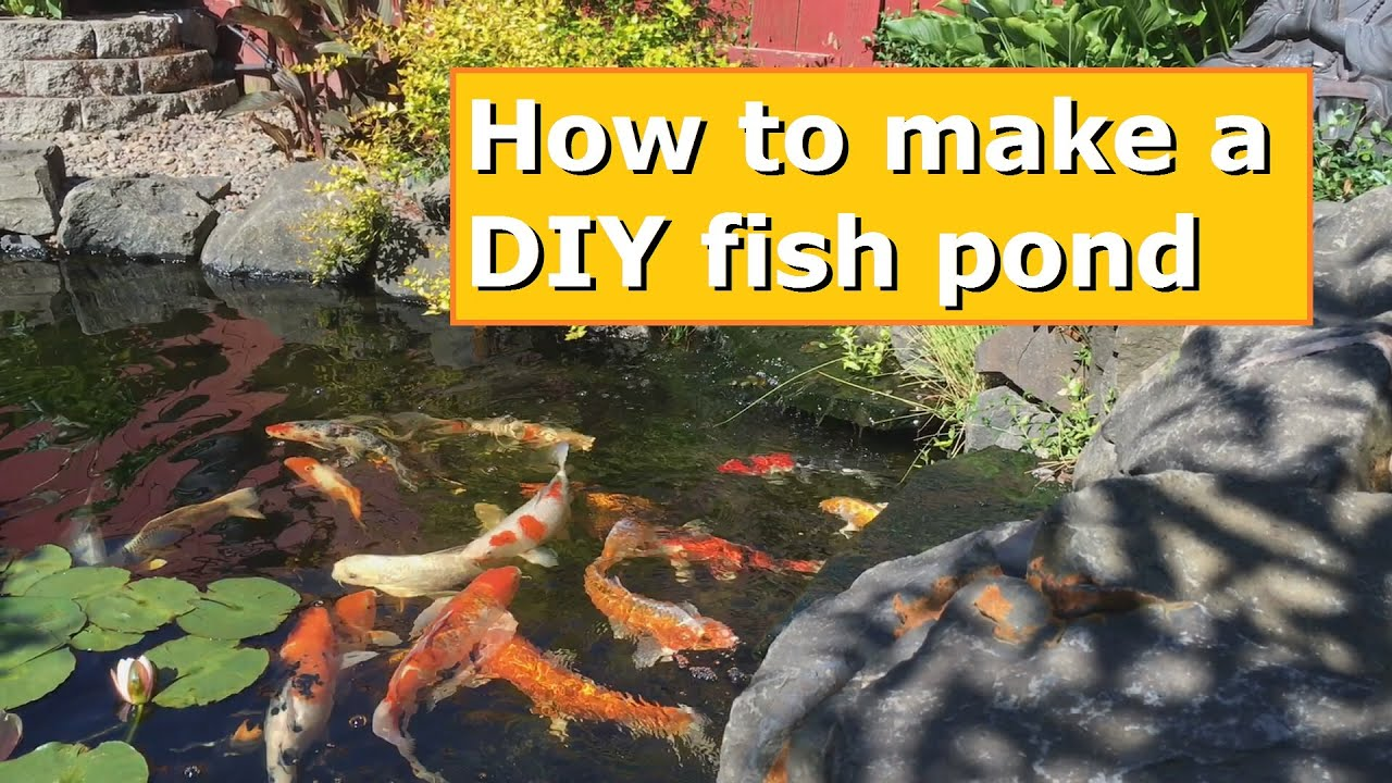 How to make your own diy fish pond youtube for Create your own fish