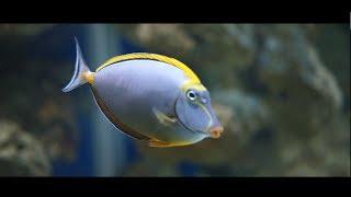 Danmarks akvarium:Den Blå Planet - Denmark