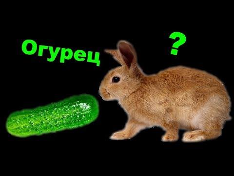 Вопрос: Можно давать помидоры кроликам?