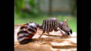 most weird and cute animals in the world