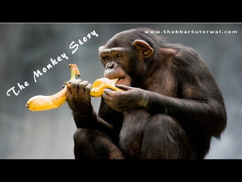 The Monkeys and the Bananas Story