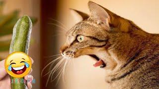 Я РЖАЛ ДО СЛЕЗ😂 Смешные видео ● приколы с котами и собаками, КОТЫ ПРИКОЛЫ #2 /Funny Cats Compilation