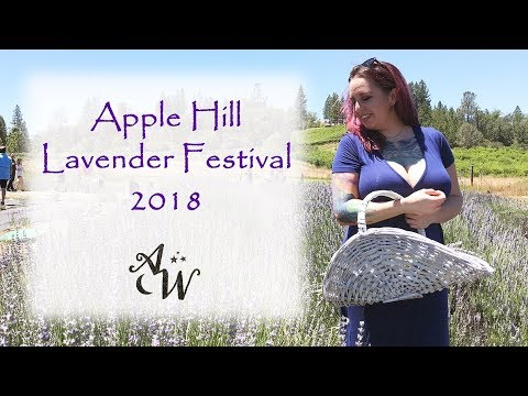 Apple Hill Lavender Festival 2018