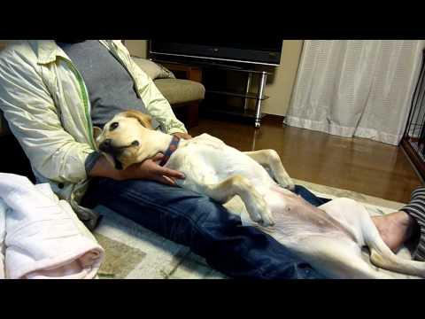 盲導犬アトム号失踪100日 もう 僕をお家に帰して 盲導犬のママ