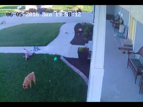 neighbors dog pooping in my yard