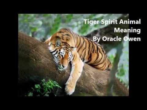 tiger-spirit-animal-meaning