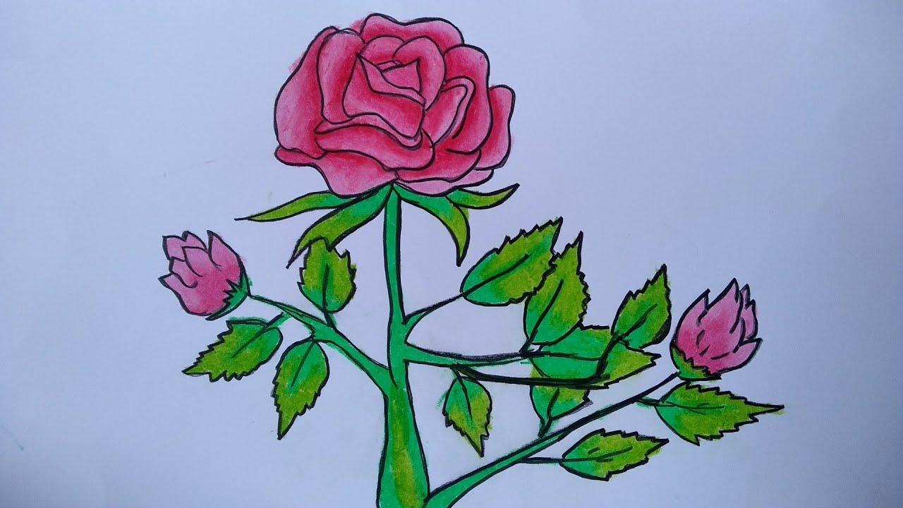 Cara menggambar bunga mawar || Cara menggambar dan mewarnai yang ...