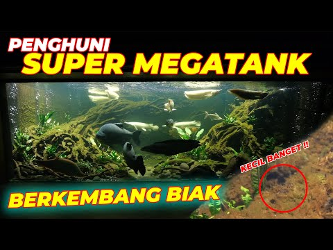 #eps67-super-megatank-|-seneng-banget-!!-penghuni-super-megatank-berkembang-biak