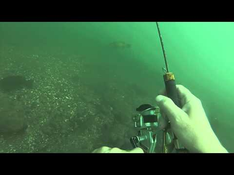 Upper Niagara River Underwater Fishing Wicked Bass Hit.