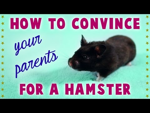 "How to ""CONVINCE YOUR PARENTS"" for a HAMSTER"