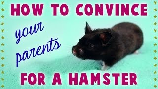 "How to ""CONVINCE YOUR PARENTS"" for a HAMSTER Thumbnail"
