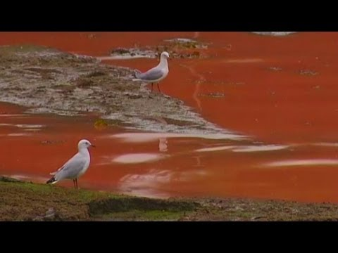 Red Water: Rare algae turns sea in Sydney to the colour of tomato soup