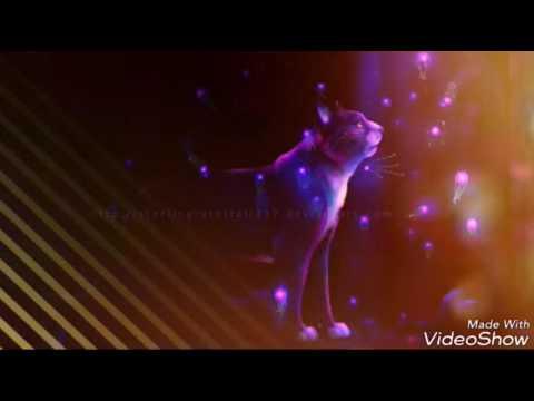 Бич Путь к власти Коты воители вики Fandom powered by
