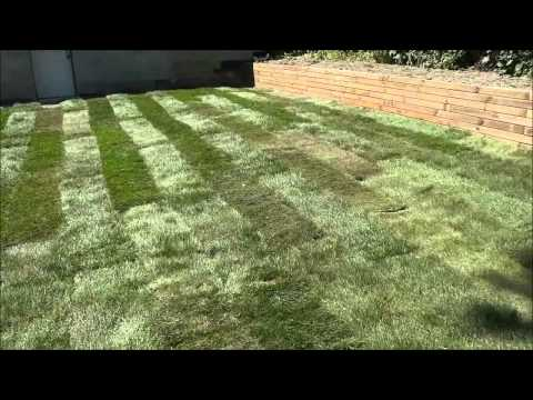 Laying Sod In My Backyard-DIY Landscaping