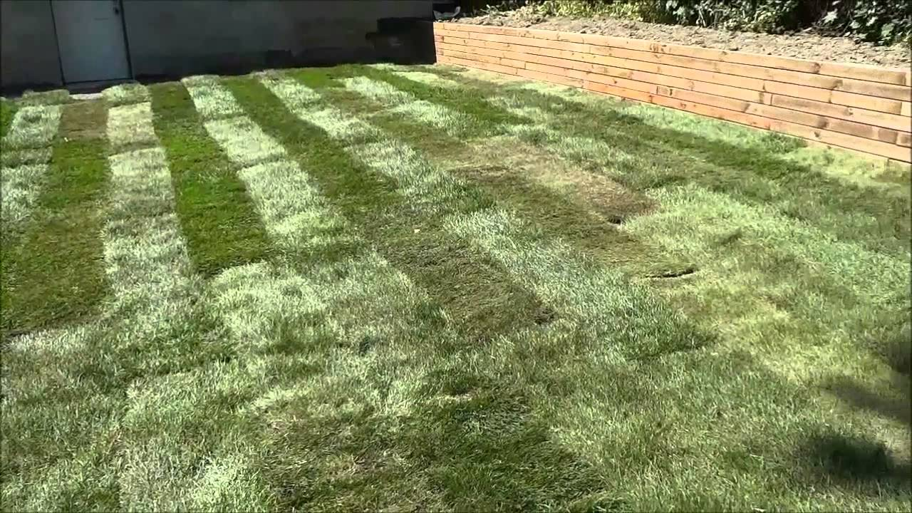 Laying Sod In My Backyard DIY Landscaping