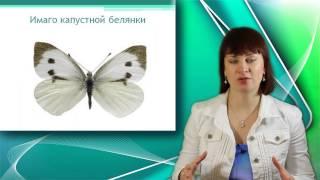 Отряд Бабочки. Класс Насекомые. Уроки Биологии Онлайн