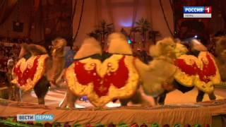 Шоу «Бонобо»: премьера в пермском цирке