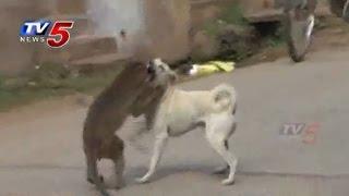 Monkey and Dog Friendship in Guntur : TV5 News