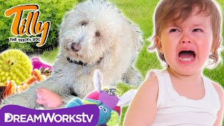 Dog vs. Baby: Epic Toy War | TILLY THE TRICKY DOG