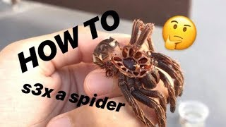 NO MORE ASSUMING GENDERS ~ How to tell if your TARANTULA is MALE or FEMALE