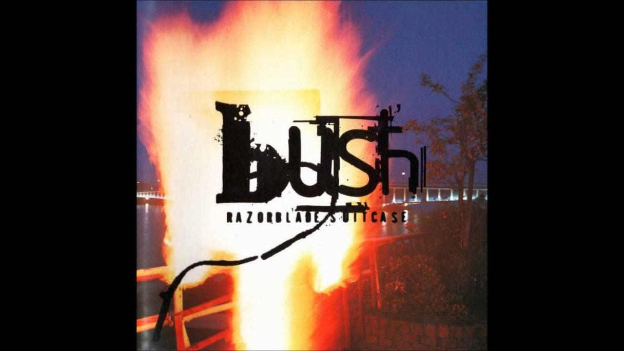bush-synapse-ryan-roymega