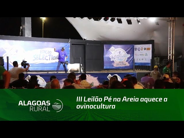 III Leilão Pé na Areia aquece a ovinocultura em Alagoas