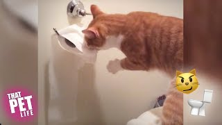 Cats vs. Toilet Paper 😼🥊🚽 | Try Not to Laugh Challenge