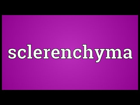 Header of sclerenchyma