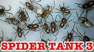 Redback Spider Tank 3 The Hunger Games Begin EDUCATIONAL VIDEO Part 1