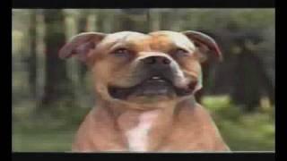 Staffordshire Bull Terrier Standard Video 1 Rész