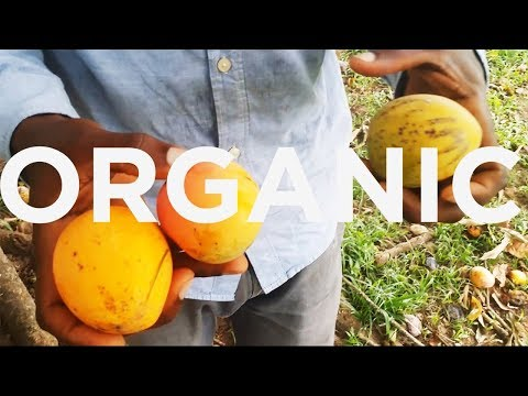 VLOG l Caribbean Health Summit | WOW! Apple Picking | Blueprint Planting