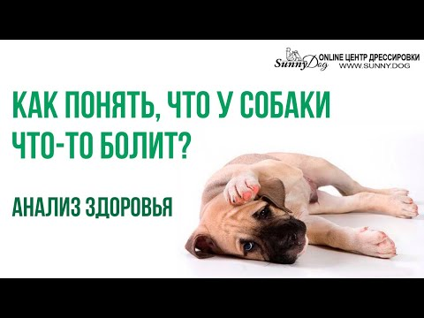 Чем могут болеть собаки