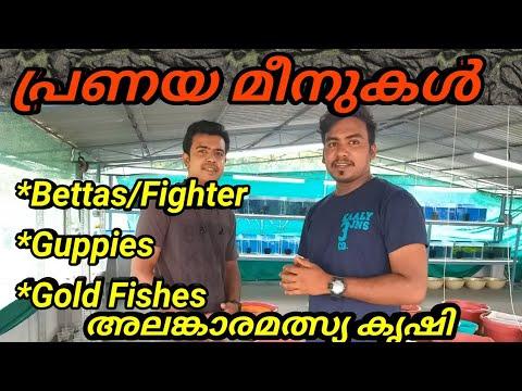 Download Guppy||Bettas||Gold Fishes||അലങ്കാരമൽസ്യ കൃഷി||Guppy Farming||Our Dream Factory||